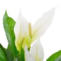 Planta artificial Anthurium con macetero 90 cm blanca
